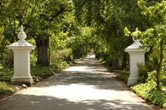 Driveway. Tree lined driveway with solid gateposts Royalty Free Stock Photos