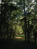 A driveway bends through and dense green forest dirt road through a dense forest royalty free stock photography