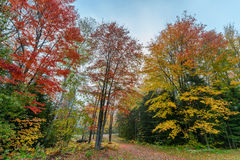 Driveway Through Colorful Autumn Trees Stock Image