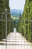 Driveway with Cypress Trees in Tuscany Stock Photos