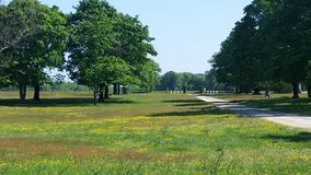Driveway by a Field. An open field next to a driveway Royalty Free Stock Images