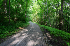 Driveway in the forest. Sigulda. royalty free stock photo