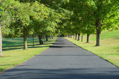 Driveway Lined by Trees Stock Photos