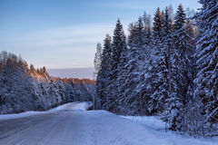 Driveway through the snow-covered forest. Sunlit treetops Stock Photos