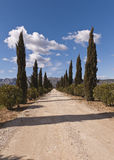 The Driveway to a Vineyard, Provence, France. The driveway to a vineyard, lined by cypress trees, near Puyloubier, Provence, France Royalty Free Stock Photography