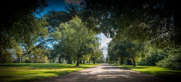 Driveway Under the tree canopy stock images
