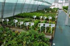 Drivhus för växande dekorativa buskar och klipp för plantor Royaltyfri Fotografi