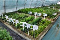 Drivhus för växande dekorativa buskar och klipp för plantor Royaltyfria Bilder