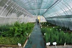Drivhus för växande dekorativa buskar och klipp för plantor Arkivfoto