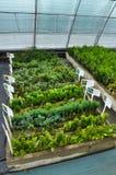 Drivhus för växande dekorativa buskar och klipp för plantor Arkivbilder