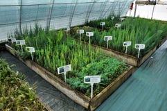 Drivhus för växande dekorativa buskar och klipp för plantor Royaltyfri Bild