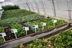 Drivhus för växande dekorativa buskar och klipp för plantor Arkivfoton