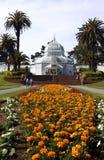 drivhuset blommar francisco san Arkivbild