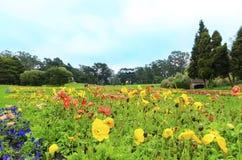 drivhuset blommar francisco san Arkivfoton