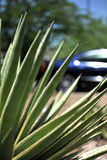 Driving across Arizona Royalty Free Stock Photography