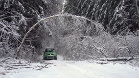 Driving along road with fallen trees, after intense ice storm. Cars go along road with fallen trees, after intense ice storm stock video footage