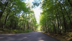 Driving through autumn forest road stock video