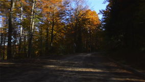 Driving through Autumn Woods stock video footage
