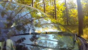 Driving a car, in a forest, camera aimed at the driver stock footage