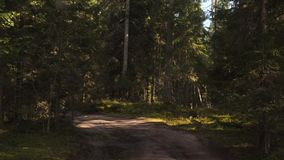 Driving Car Gravel Forest Road. 4K Slowmotion pov. stock video footage