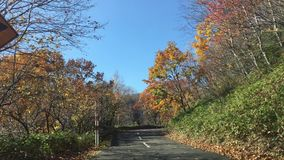 Driving a car in Hokkaido. Japan during autumn season, red and yellow leaves all along the road stock video