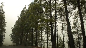 Driving a car on the mountain road. Through beautiful landscapes stock footage