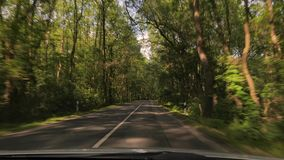 Driving a car, trees by the road stock footage
