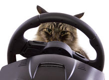 Driving Cat Royalty Free Stock Images