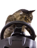 Driving Cat Stock Photos