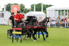 Driving competition horse drawn carriage. Carriage Driving or horse driving competition at a country show . two drivers and horses pulling the carriage around a stock photo