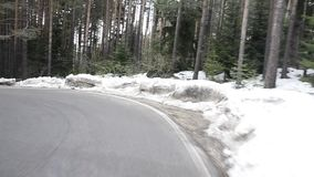 Driving on a curve road in the forest
