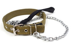 Driving dog and dog collar Royalty Free Stock Photography