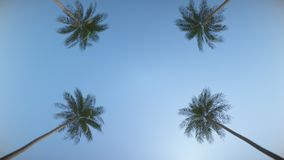 Driving down the street between tropical palms. Loop animation. In Ultra HD. stock video footage