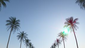 Driving down the street between tropical palms under the blue summer sky. Loop animation. In Ultra HD 4k. stock footage