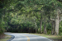 Driving on Edisto. A photograph of a curving highway on Edisto Island under a canopy of leaves and spanish moss Stock Photos