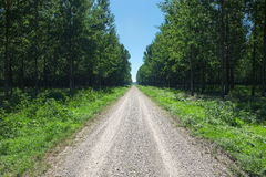 Driving on an empty dirt road through the forest Royalty Free Stock Photo