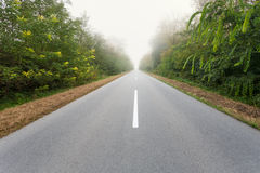 Driving on an empty road through the forest Royalty Free Stock Image