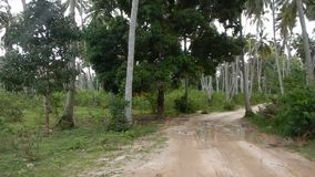 Driving on an empty road in Zanzibar. In Africa stock video