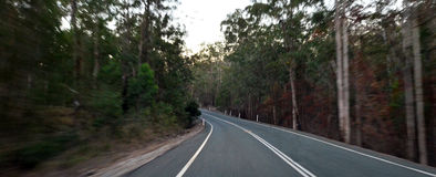 Driving through forest in Queensland Australia Stock Photography