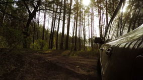Driving in the Forest Road stock footage