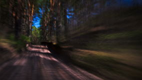 Driving on a forest road, timelapse stock footage