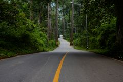 Driving Forest Roads. stock photos