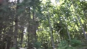 Driving by forest, wood road traffic, pov tracking car, auto window view, nature stock footage