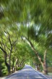 Driving through the Green Forest. And road in motion blur Royalty Free Stock Photo