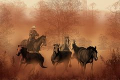 Driving the Herd. A cowboy drives a herd of horses back to the ranch Stock Images