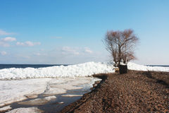 Driving of ice on a big river. Tree on the bank of the river in the spring Royalty Free Stock Photo