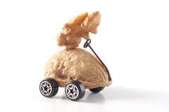 Driving me nuts Royalty Free Stock Photos