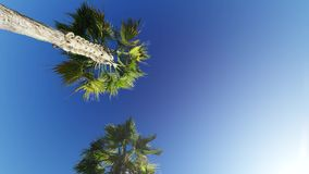 Driving through Palm Trees on blue sky. Driving through Palm Trees on crear blue sky stock footage