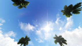Driving through Palm Trees on blue sky stock footage