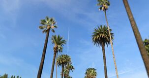 Beverly Hills street with palm trees. Driving through Palm Trees on a street in Beverly Hills, CA, USA stock video